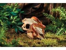 Decoració Exoterra Crani de búfal