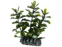 Planta HOBBY bacopa
