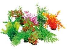 Planta Wave planta tropical 22-25cm