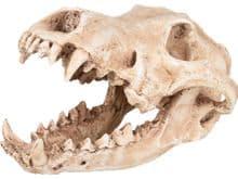 Decoració Flamingo skelo crani predador 24x13x13