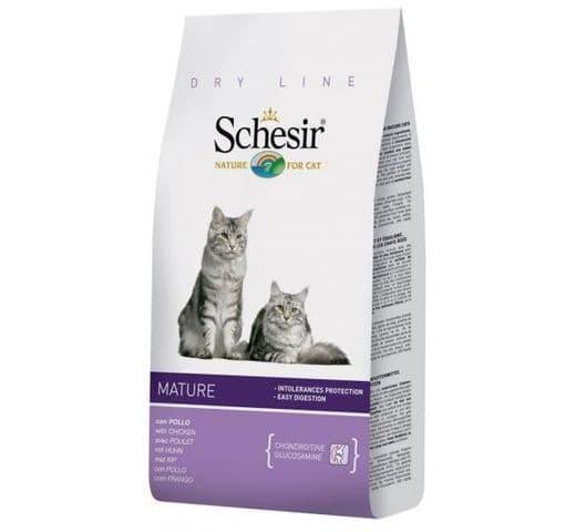 Pinso Schesir gat mature 1